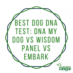 Best Dog DNA Test: DNA My Dog vs Wisdom Panel vs Embark