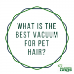 Best Vacuum For Pet Hair: Dyson vs Shark vs Bissell vs Electrolux
