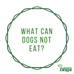 Worst Things To Feed A Dog and What Can Dogs Not Eat?