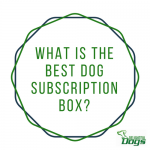 Best Dog Subscription Box: PupBox vs BarkBox vs BullyMake vs PawPack