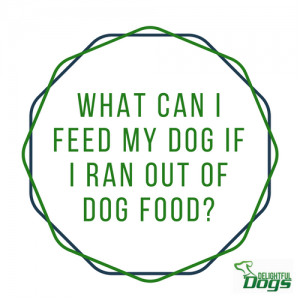 What Can You Feed Your Dog If You Ran Out Of Dog Food?