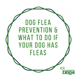 Dog Flea Prevention