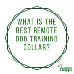 Best Remote Dog Training Collar: Dogtra vs PetSafe vs Sportdog 350 vs 425