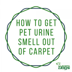 Best Pet Urine Remover: How To Get Pet Urine Smell Out Of Carpet