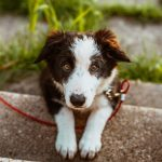 Rover vs Wag: Compare The Leading Dog Boarding And Walking Services