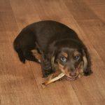 Can Dogs Eat Rib Bones?